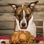 Thanksgiving Safety for Your Pet